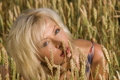 Blonde sitting on a field of wheat Stock Images