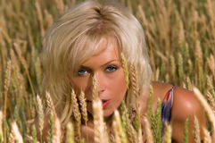 Blonde sitting on a field of wheat Royalty Free Stock Images