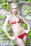 Blonde Swimsuit Model on Vines. Gorgeous young blonde girl wearing a two piece red shiny swimsuit looking at the camera while posing on a vine background Royalty Free Stock Photo