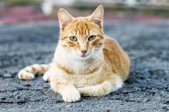 Blonde und weiße Katze, welche die Kamera, im Freien aufwirft und betrachtet. Stockbilder