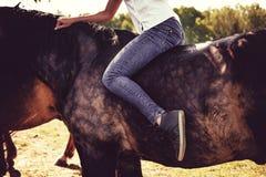 Blonde weibliche Aufstellung mit braunen Pferden auf einem Gebiet Stockfotografie