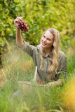 Blonde winegrower handing a red grape Stock Image