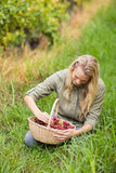 Blonde winegrower looking at a red grapes basket Royalty Free Stock Photography