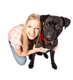 Blonde woman with boxer dog. Blonde woman crouching with cute brindle boxer breed dog with red collar Stock Image