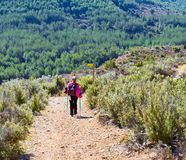 blonde woman with colorful backpack, cap and poles trekking on a path of sand and stones walking down a mountain across green royalty free stock images