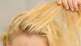 Blonde woman having greasy hair. Unrecognizable woman showing oily roots on her blonde hair. Female having greasy scalp royalty free stock images