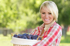 A Blonde Woman Holding a Basket of Plums. A young blonde woman holding a basket of plums stock photo