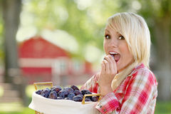 A Blonde Woman Holding a Basket of Plums. A young blonde woman holding a basket of plums stock images