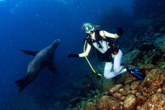 Blonde woman playing with sea lion Stock Images