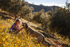 Blonde woman with spanish mastiff on a field of yellow flowers stock image