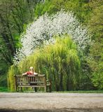 Blonde woman in red shirt sitting on wooden bench in park. Looking at lush trees, one with white blossoms Stock Photos