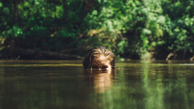 Blonde Woman's Head Peeking Up from the Water from the Eyes Up Royalty Free Stock Image