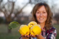 Blonde woman with three quinces in her hand. Blonde woman with three quinces in her hand in the foreground, yellow and big, in a field with trees, dressed in a stock photo