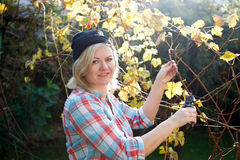 Blonde woman trim branch by small hedge cutter Royalty Free Stock Photography