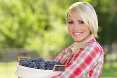 Blonde Young Woman with Basket of Plums. A young blonde woman holding a basket of plums stock photos