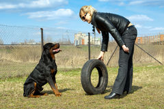 Blonde young woman with rottweiler on training. Blonde young woman with rottweiler and tire on a training Royalty Free Stock Photo