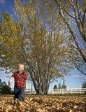 Blonder Junge, der durch Herbst-Blätter aufweckt Stockfoto