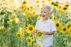 Blonder Junge des entzückenden Kleinkindes in einem Hemd auf Sonnenblumenfeld Spaß draußen lachend und habend Lebensstil, Sommerz Stockbilder