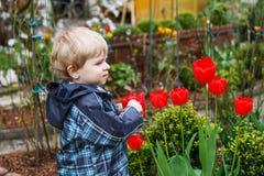 Blonder kaukasischer Kleinkindjunge mit großen Tulpen Lizenzfreie Stockbilder