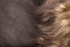 Blonder Pelz über dunkelbraunem Leder Stockbild