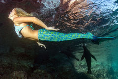 Blonder schöner Meerjungfrautaucher Unterwasser Stockbilder