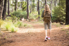 Blonder Wanderer, der auf Weg wandert Lizenzfreie Stockbilder