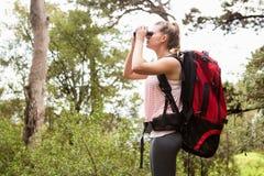 Blonder Wanderer, der durch Ferngläser schaut Stockfoto