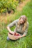 Blonder Weinbauer, der einen Korb der roten Trauben betrachtet Lizenzfreie Stockfotografie