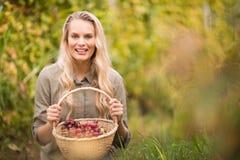 Blonder Weinbauer, der einen Korb der roten Trauben hält Lizenzfreies Stockbild