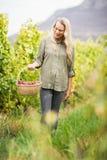 Blonder Weinbauer, der mit ihrem Korb der roten Trauben geht Lizenzfreies Stockbild