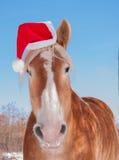 Blondes belgisches Entwurfspferd, das einen Sankt-Hut trägt Lizenzfreie Stockfotos