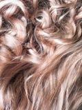 Blondes Haar gemasert Stockfoto