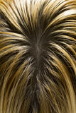 Blondes Haar mit dunklen Wurzeln Lizenzfreies Stockbild