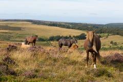 Blondes Haar und Franse des Ponys Lizenzfreie Stockfotos
