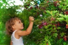 Blondes Kind, das reife rote Johannisbeeren erreicht Stockbilder