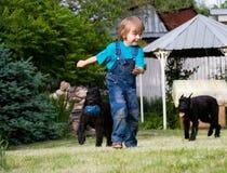 Blondes Kind und Paare der schwarzen Hunde Stockfotografie