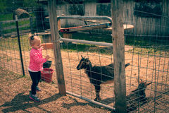 Blondes Kleinkind-Mädchen, das durch Zaun Ziege betrachtet Lizenzfreie Stockfotografie