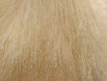 Blondes Lockenhaar Lizenzfreie Stockfotos