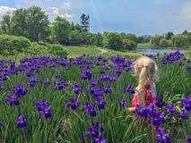 Blondes Mädchen, das auf dem Gebiet von purpurroten Blumen steht Stockfotografie