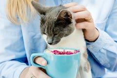 Blondes Mädchen im Jeanshemd, das eine blaue Cappuccinoschale und -spiel mit Katze hält Lizenzfreies Stockfoto