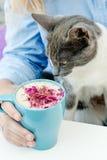 Blondes Mädchen im Jeanshemd, das eine blaue Cappuccinoschale und -spiel mit netter Katze während des Frühstücks hält Lizenzfreie Stockfotos