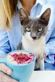Blondes Mädchen im Jeanshemdgriff ein Schale Cappuccino Katze, die eine Kamera untersucht Stockfotografie