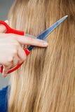 Blondes Mädchen macht neues Haarbild Stockbilder