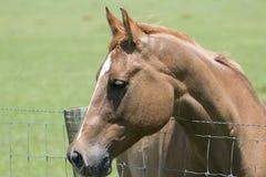 Blondes Pferdeprofil Lizenzfreie Stockfotografie