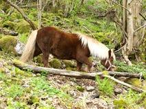 Blondes Pony Lizenzfreie Stockfotos