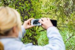 Blondine, die ein Telefon verwenden, machen ein Foto einer Landschaft Stockbilder