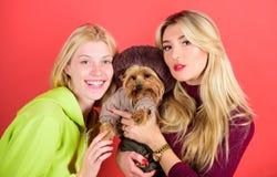 Blondynek dziewczyny adorują małego ślicznego psa Kobiety uściśnięcia Yorkshire terier fajny pies pet Yorkshire terier jest bardz obrazy royalty free