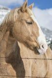 blondynka koń Zdjęcia Royalty Free