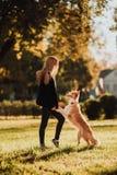 Blont flickadrev som hennes hund border collie i gräsplan parkera i solsken royaltyfri foto
