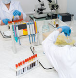 Blood analysis making Royalty Free Stock Image
